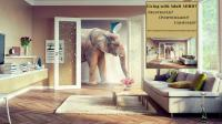 Elephant In The Living Room - [peenmedia.com]
