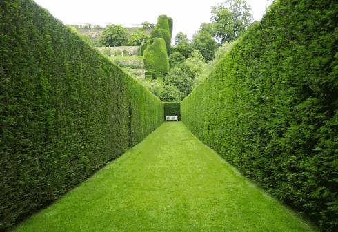 Правильно озеленить обычную дачу