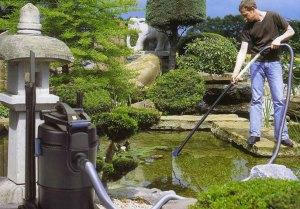 Как правильно ухаживать за прудом?