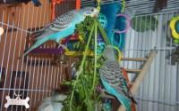 Как правильно выбрать попугаю клетку?
