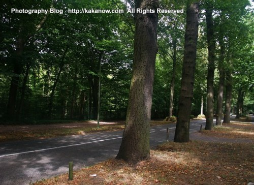 The Netherlands countryside trees. Holland car drive travel, Photo by KaKa.