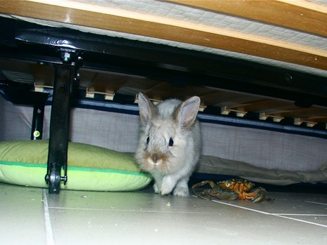 Lapinpin and Mediterranean crab are under the bed. France, Marseille, photo by KaKa.