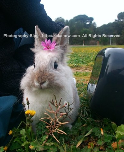 Lapinpin is a girl. Marseille, France, spring. Photo by kaka.