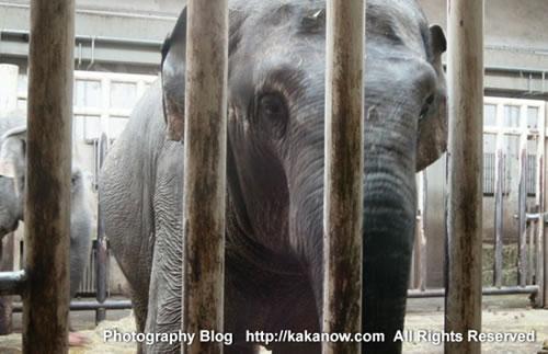 Elephants in Beijing Zoo, China. Photo by KaKa.