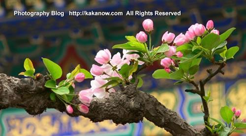 The spring of Beijing Yiheyuan(the summer palace), China. Photo by KaKa.