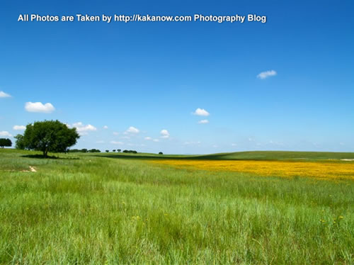 China travel, Inner Mongolia, Horqin Prairie, flowers. Photo by KaKa.