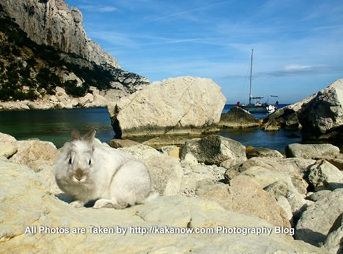 France, Marseille, rabbit Lapinpin at the seaside of Les Calanques. Photo by KaKa.