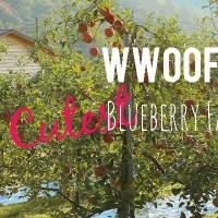 WWOOFing on the Cutest Little Farm in Korea