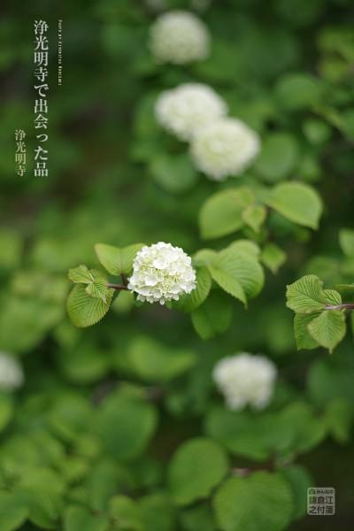 浄光明寺03