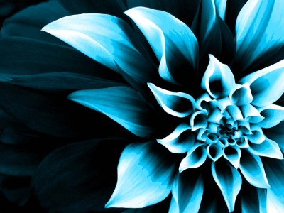 Flower-Wallpaper COLOR CHANGE | kamishadjones