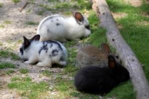 Kaninchenstallkaufen