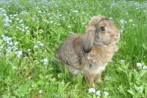 Kaninchen Hygiene