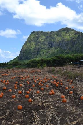 F15_10_Taylor_pumpkinpatch_pumpkins