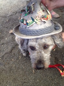 Some hat's dog.