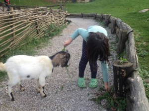 "A few goats and a pony roamed the yard while some other animals were off in a ""petting zoo"" setting.  Sequoia was very happy with these areas of the hotel, and as such, has a much better memory of this hotel."