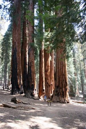 Sequoia National Park, CA - 2006 (photo by Paul Martindale)