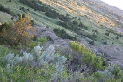 Theodore Roosevelt National Park, ND - 2006