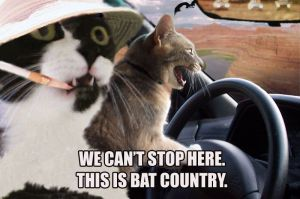 Picture of cats in bat country