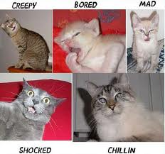 Photo of cat emotions