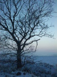 frozen_winter_tree_by_hokota-d35iod4