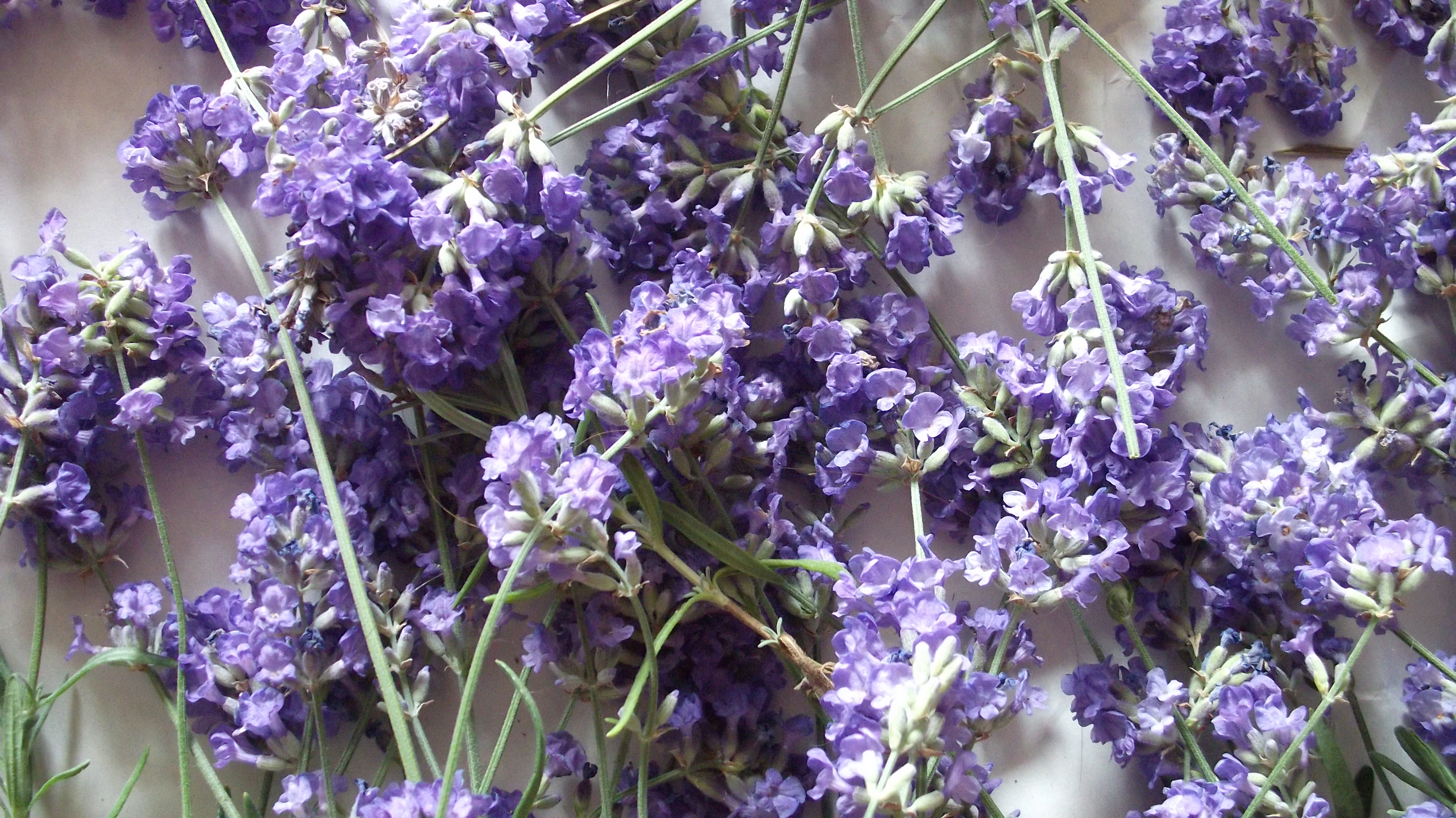 Lavendel Drogen Lavender Recipes For Beauty Karonv
