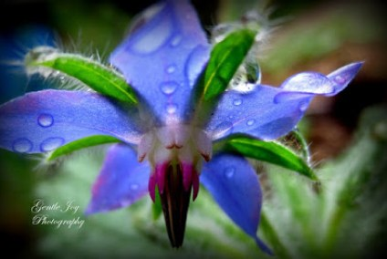 Water Jewels in the garden-Gentle Joy Photography 6-22