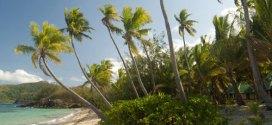 coconut_palms11
