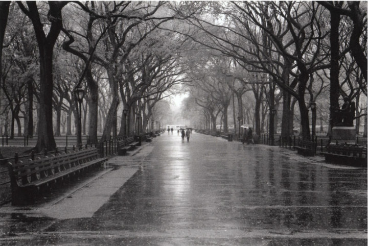 Central Park Fall Wallpaper Rainy Day Central Park