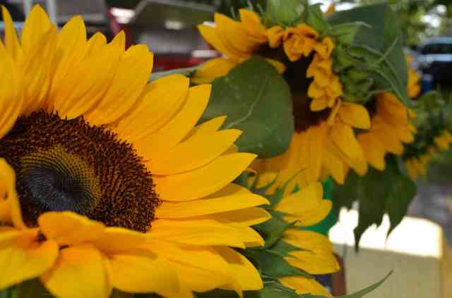 Richland Farmer's Market Review