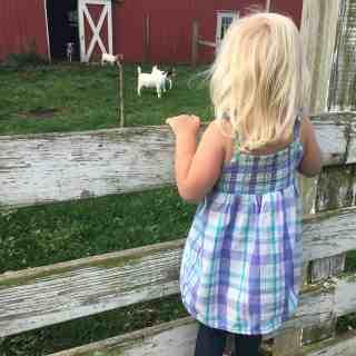 layla goats