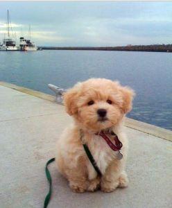 Sort Of Wordless Wednesday Puppy