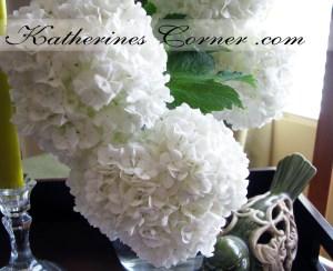 Snowballs Viburnum