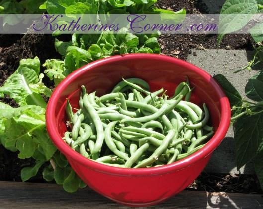 fresh garden green beans