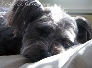 Izzy the blog dog at katherines corner