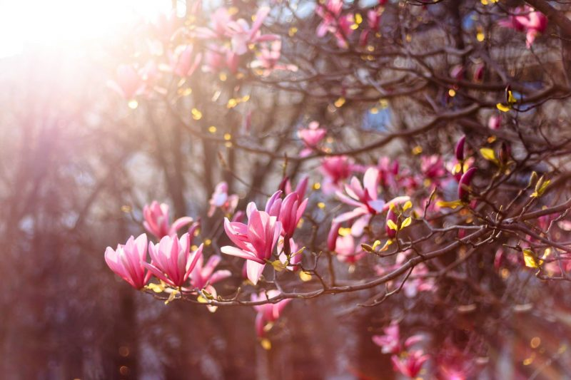 SPRING IN PARIS 2018 THE BEST VIEWING SPOTS FOR BLOSSOM SEASON
