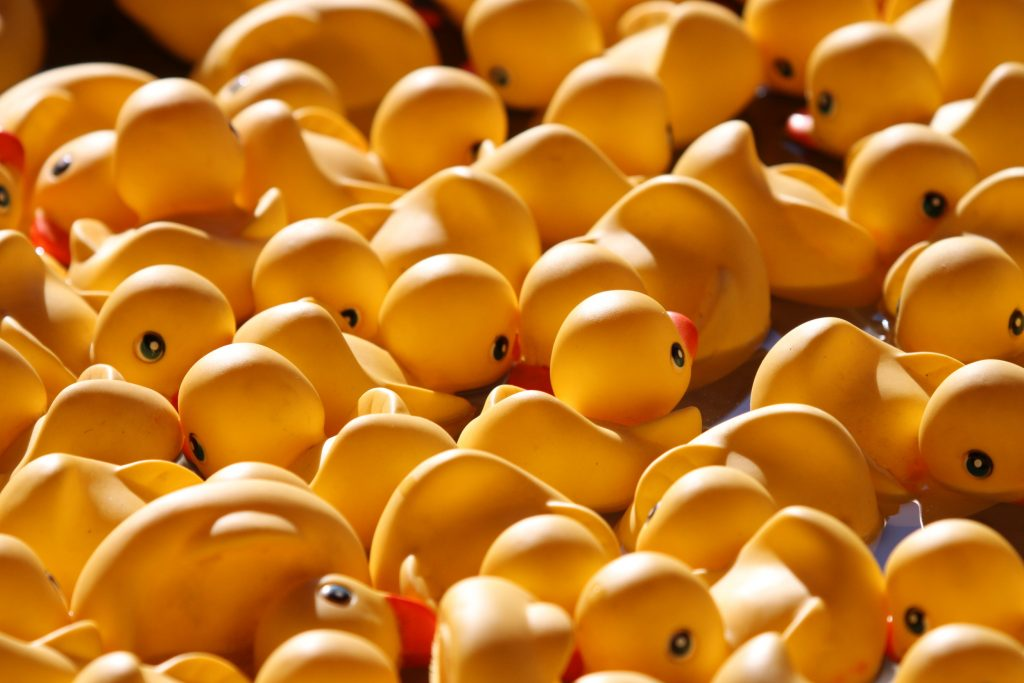 Alt text: A photograph of an immense amount of yellow rubber duckies.