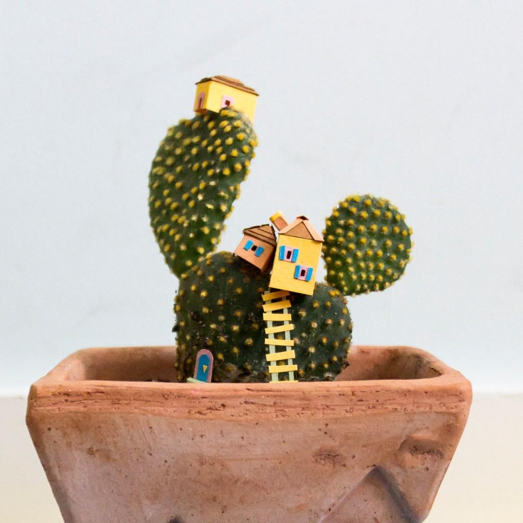 cactus house2