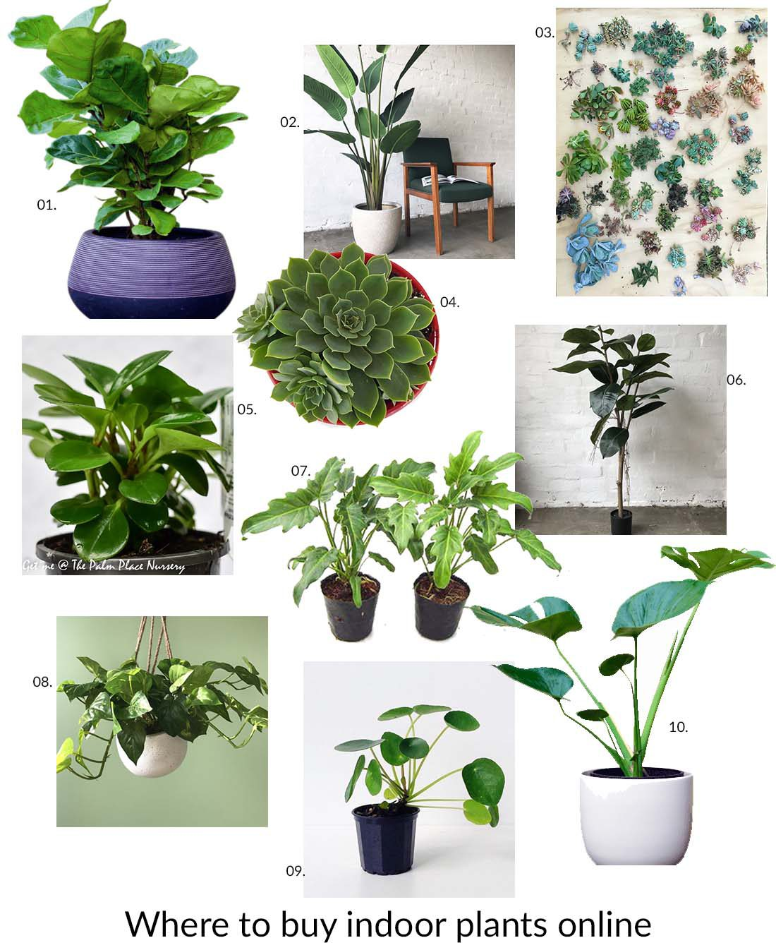 Where To Buy Indoor Plants Online Where To Buy Indoor Plants Online