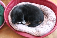 Dogs Bed out of old sweatshirts | Kazy's Kitchen