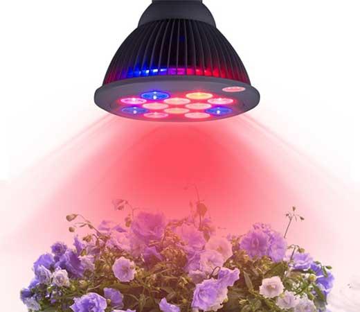 lampara-plantas-bk