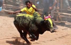 ராமநாதபுர மாவட்டத்தில் தொடரும் ஜல்லிக்கட்டு போராட்டம்!!
