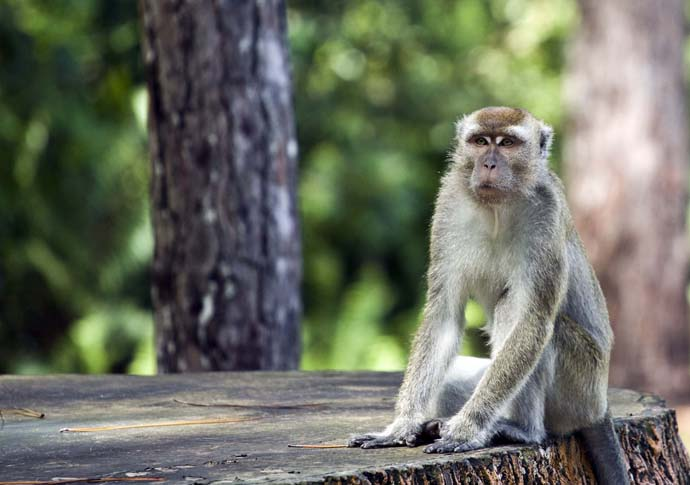 Brunei Things To Do Monkey