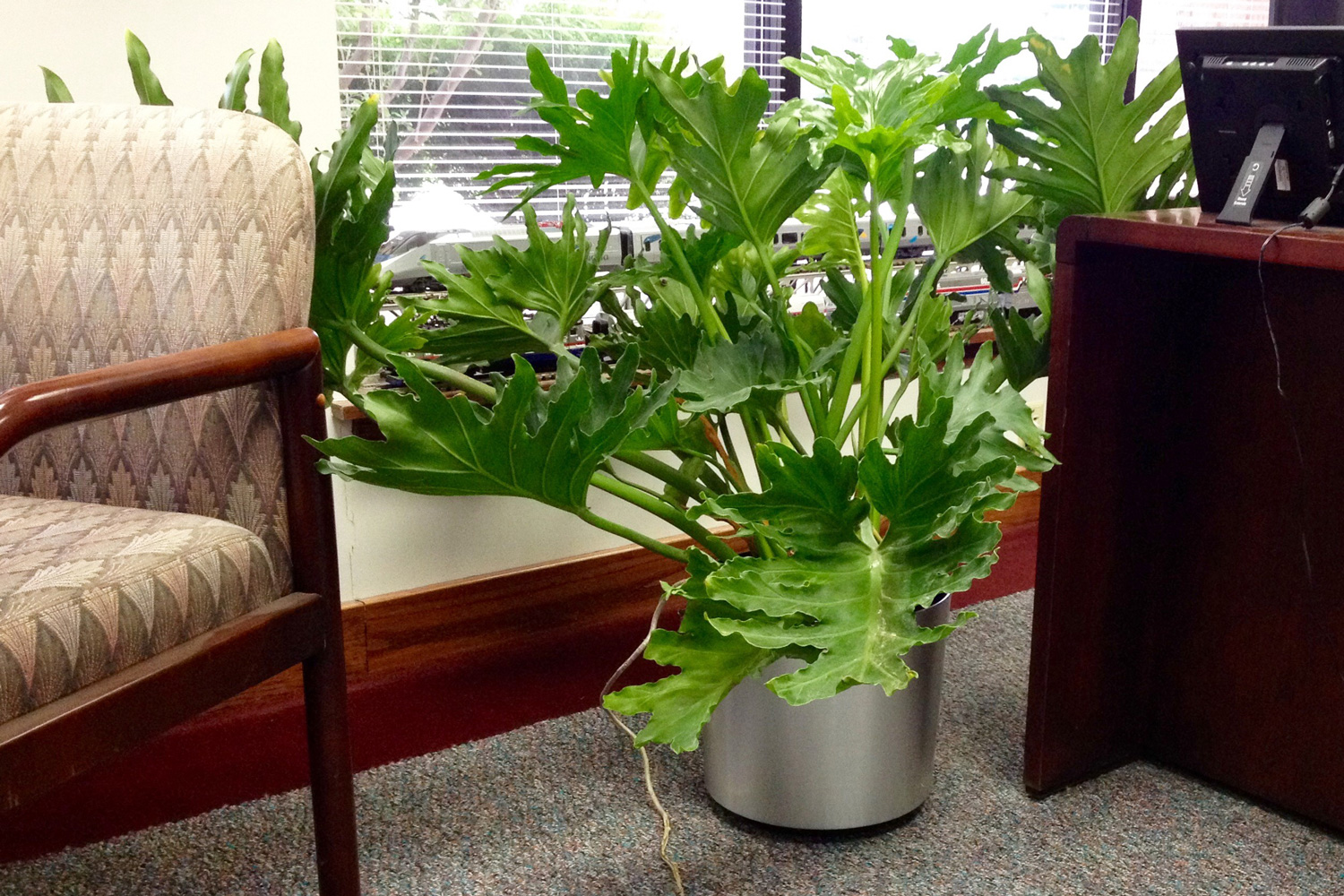 Tropical Foliage Indoor Plants Indoor Tropical Plants For Offices Interior Landscaping