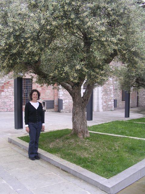 olive%20tree.jpg