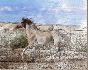 lukisan kuda 14