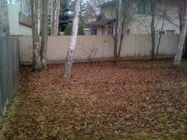 02-backyard-1