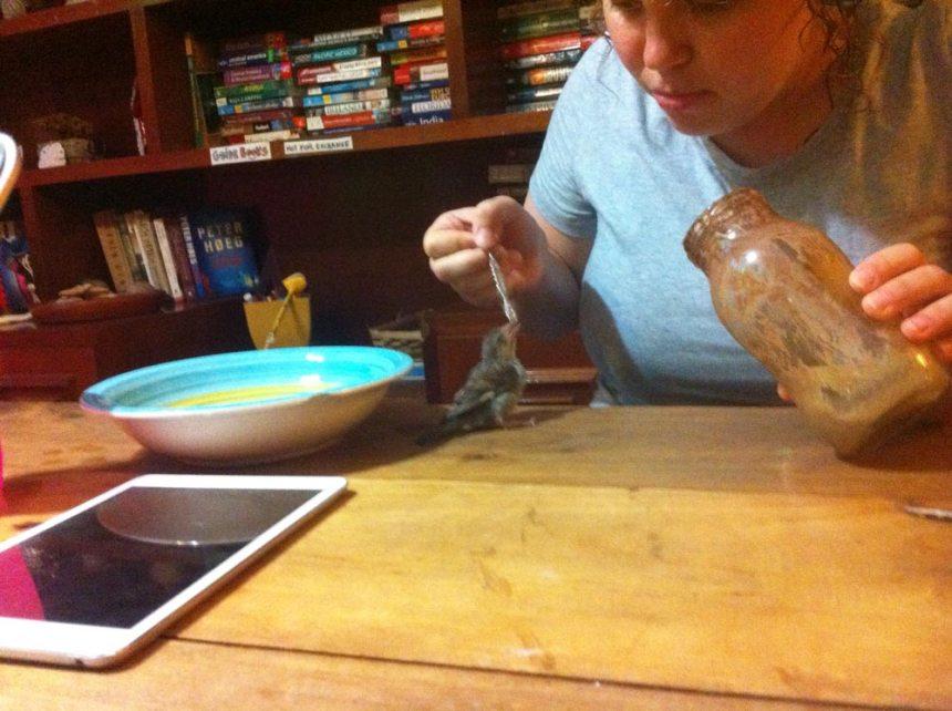 Irina alimentando a un pájaro que no podía volar