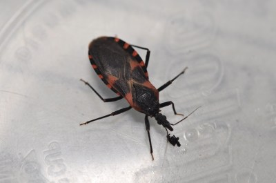 Kissing Bugs | Kentucky Pest News