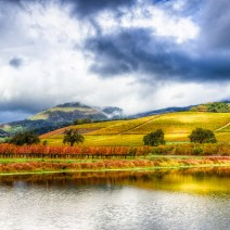Vineyard-Sonoma-Landscape-Kevin-Kowalewski-2