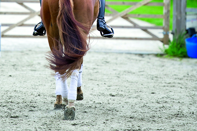 Suspensory Ligament Injuries All You Need To Know Horse